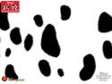 Tapeta 101 Dalmatinů 5