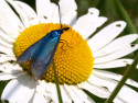 Tapeta Modrý hmyz