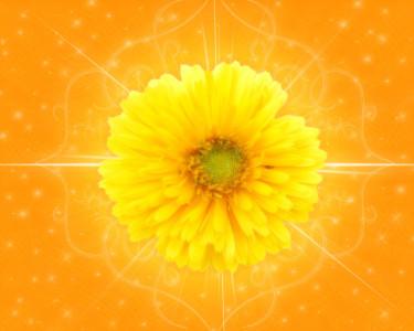Tapeta: Květ