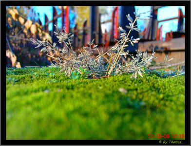 Tapeta: Tráva