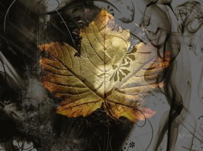 Tapeta: ***Barvy podzimu I ***