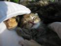 Tapeta ...kotě už spí...