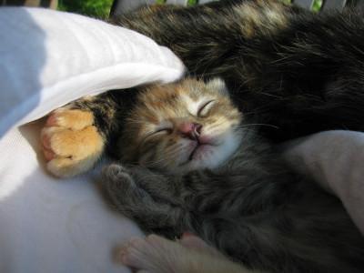Tapeta: ...kotě už spí...