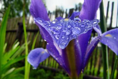 Tapeta: fialovy list a kapicky