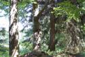 Tapeta A stromy rodí ve stoje...