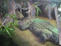 Tapeta Aligátor