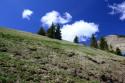 Tapeta Alpská pastvina
