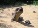 Tapeta Apatosaurus 1