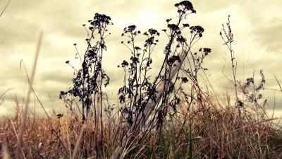 Tapeta: autumn paradise No.1