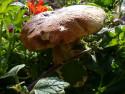 Tapeta Balkónová houba