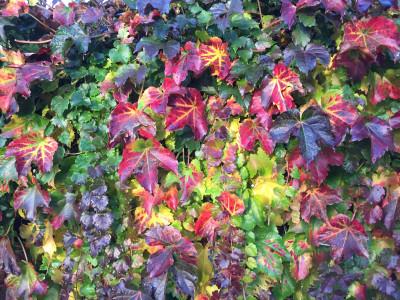 Tapeta: Barvy podzimu