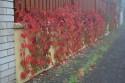 Tapeta Barvy podzimu 1