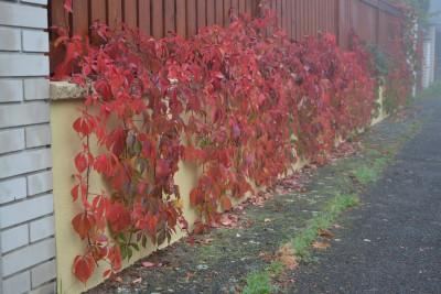 Tapeta: Barvy podzimu 1