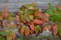 Tapeta Barvy podzimu 2