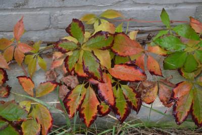 Tapeta: Barvy podzimu 2