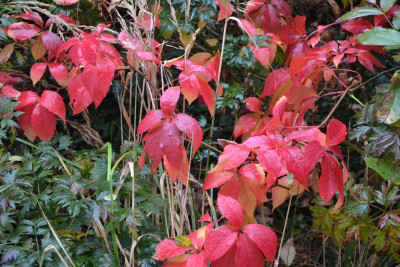 Tapeta: Barvy podzimu 3