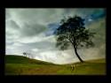 Tapeta Baum