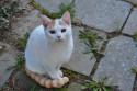 Tapeta Bílá kočička