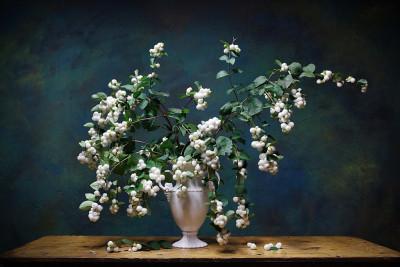 Tapeta: bílé bouchačky