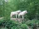 Tapeta Bílí vlci