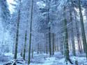 Tapeta bílý les