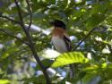 Tapeta Bird12