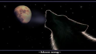 Tapeta: Black wolf