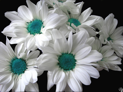 Tapeta: Blue-White