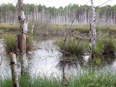 Tapeta: Borkovická blata