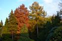 Tapeta Botanická zahrada