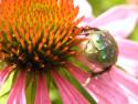 Tapeta Brouk na květu