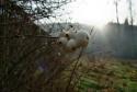 Tapeta Brzké ráno v prirode