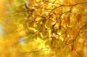 Tapeta Buk-podzim