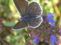 Tapeta butterfly