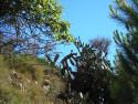 Tapeta Calella-kaktus 2