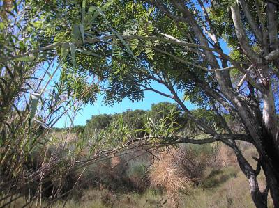 Tapeta: Calella-zákoutí 1