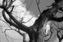 Tapeta Cernobily strom
