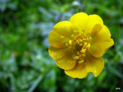 Tapeta: čerstvě umytá krása