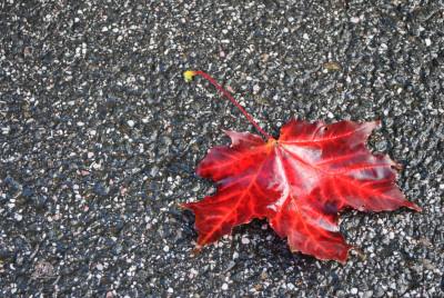 Tapeta: Červená