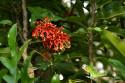 Tapeta Červený květ