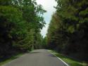 Tapeta cesta lesem