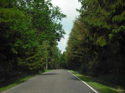 Tapeta: cesta lesem