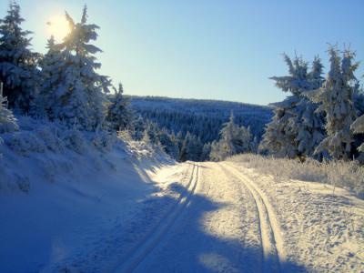 Tapeta: Cesta v zimě