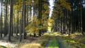 Tapeta Cesta z lesa