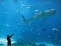 Tapeta Člověk a ryba