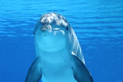 Tapeta: Delfín