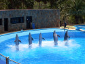 Tapeta delfíni GC