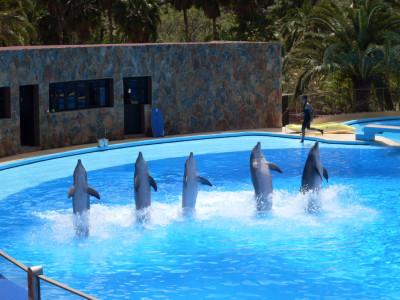 Tapeta: delfíni GC