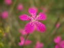 Tapeta Detail květu