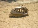 Tapeta Dino lebka